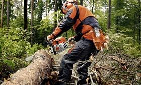 Бензопилы Stihl для лесного хозяйства